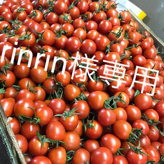 rinrin様専用 ミニトマト1kg(野菜)