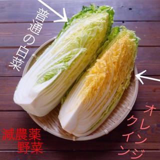 オープン記念セール♡無農薬、減農薬♡ロメインレタス&オレンジクイン♡3点セット(野菜)