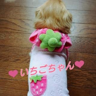 ペットパラダイス いちごちゃんロンパースDSS(犬)