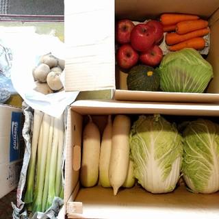 信州産野菜詰め合わせセット 仕送り風(野菜)