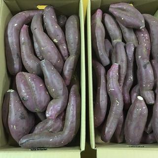 熊本の人気品種紅はるか!箱こみ約10キロ