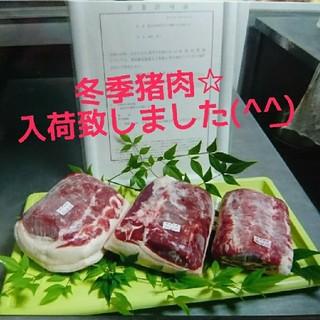 鹿児島県産☆天然猪肉☆1㎏(肉)