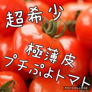 農家直送 さくらんぼみたいな食感 極薄皮プチぷよトマト(野菜)