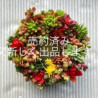 多肉植物リース   16cm   サイズ