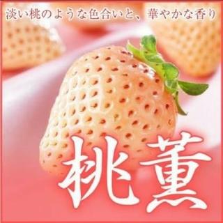 いちご苗桃薫2株