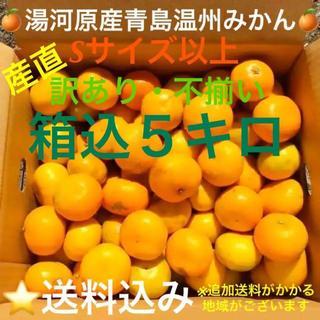 訳あり★産直不揃い5kg★神奈川県湯河原産🍊晩生 青島温州みかん🍊①
