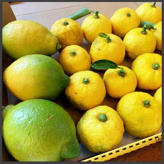 無農薬 柑橘系セット🍋1kg【宅急便コンパクト】柚子 レモン