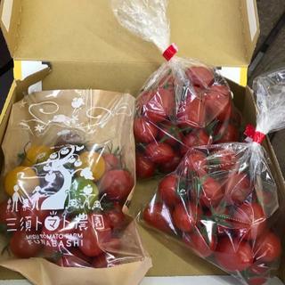<お試し用>ミニトマト3種セット(ミニトマももちゃん・カラフル・アイコ)900g
