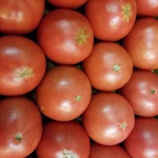 訳ありフルーツトマト 4kg(野菜)