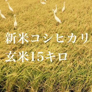 コシヒカリ玄米15キロ(米/穀物)