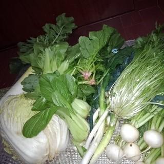 野菜セット(野菜)