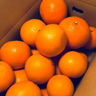 ご家庭用 高級みかん【紅まどんな】S〜3L玉 2kg(フルーツ)