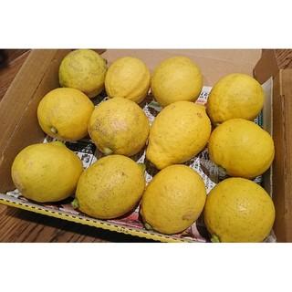 広島県大崎下島産 無農薬レモン 1.4キロ(フルーツ)