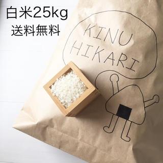 白米(米/穀物)