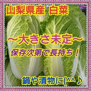 【山梨県産】白菜❤️保存次第で長持ちします!(野菜)