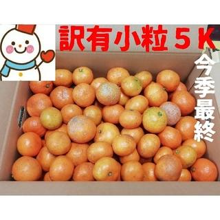 今季最終❗訳有小粒みかん5㌔❤️和歌山減農薬栽培(フルーツ)