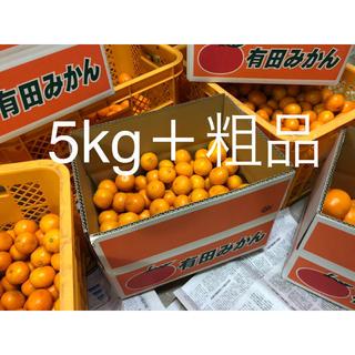 有田みかん5kg以上 SSSのちびサイズ 80個ぐらい おまけ付き(フルーツ)