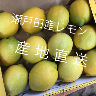 【産地直送】広島 瀬戸田産レモン(フルーツ)