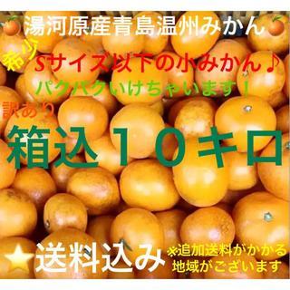 限定1箱★訳あり 神奈川県湯河原産直 晩生 青島温州みかんSサイズ以下10kg(フルーツ)
