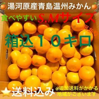 訳あり★産直S・M10kg★神奈川県湯河原産🍊晩生 青島温州みかん🍊①(フルーツ)