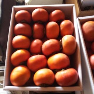 岡山の富有柿  4キロ