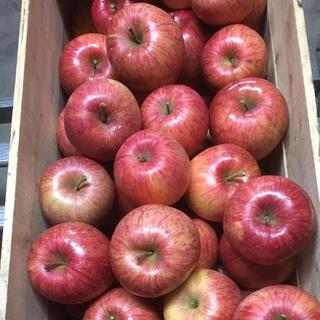 雪国青森より〜蜜入り自慢!青森県産りんご 葉とらずふじ 5キロ(フルーツ)