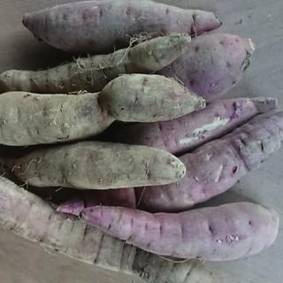 茨城県産紅はるか ミニサイズ 15キロ(野菜)