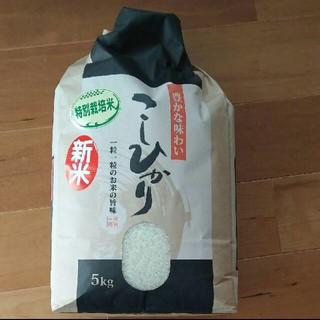 こしひかり 5キロ(米/穀物)