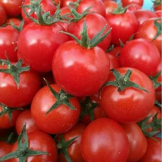 限定☆熊本県産ミニトマト(箱の重さ込)2キロ①(野菜)