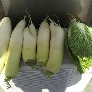 野菜(野菜)