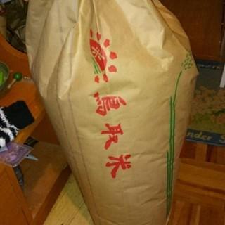 コシヒカリ 新米 30㎏(米/穀物)