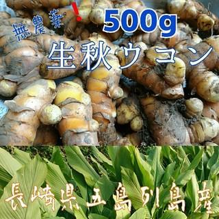無農薬❗【生秋ウコン500g】新鮮❗長崎県五島列島よりお届けです。(野菜)