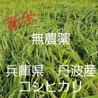 平成30年度兵庫県丹波産 無農薬コシヒカリ5キロ