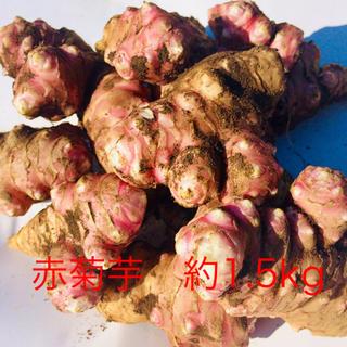 赤菊芋  約1.5kg(野菜)