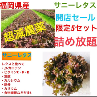 祝♡開店♡3時間セール詰め放題♡無農薬野菜➕減農薬ロメインレタス➕オレンジクイン(野菜)