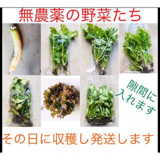 祝オープン詰め放題3時間セール♡無農薬野菜➕減農薬ロメインレタス➕オレンジクイン(野菜)