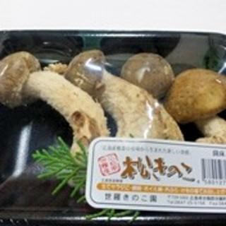 広島発 人気急上昇中!松きのこ4本セット!いっぺん食べてみんさい(野菜)