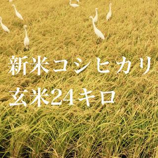 コシヒカリ玄米24キロ(米/穀物)