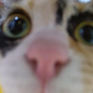 猫の写真集(その他)