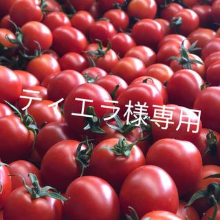 ティエラ様専用 ミニトマト1kg(野菜)