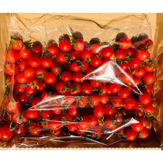 明日発送 マイクロトマト 500g  100玉から250玉(野菜)