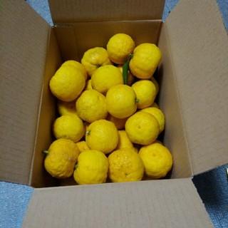 即日発送致します。花柚子 箱込み約2.1キロ。本日午後収穫しました。(フルーツ)