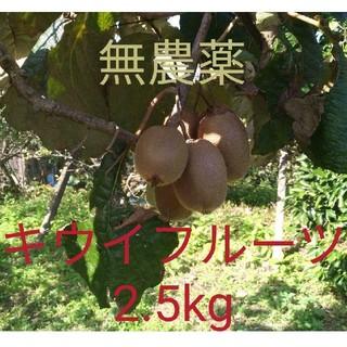 無農薬! 福岡県産 キウイフルーツ 約2.5kg(フルーツ)