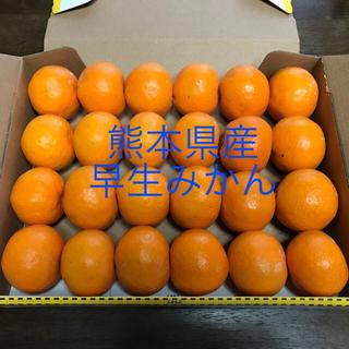 熊本県産 温州みかん 早生みかん 小玉(フルーツ)