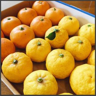 【12/15迄限定】無農薬 ゆずとみかん🍊1kg 小粒 果物(フルーツ)