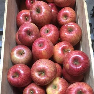 雪国青森よりお届け〜蜜入り自慢!青森県産りんご 葉とらずふじ 5キロ(フルーツ)