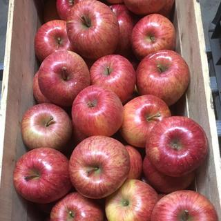 北国青森発〜蜜入り自慢!青森県産りんご 葉とらずふじ 5キロ(フルーツ)