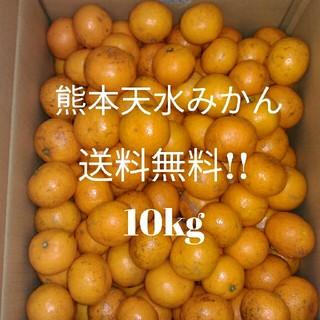 熊本県産✨天水みかん✨約10kg!2Sサイズ約130個前後✨[訳あり]