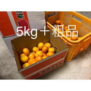 有田みかん5kg+おまけ付き 大玉 つやつや美品が多め(フルーツ)
