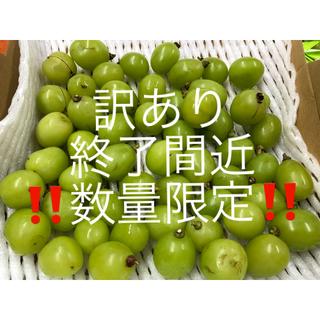訳あり 長野県産 シャインマスカット 800g 粒(フルーツ)
